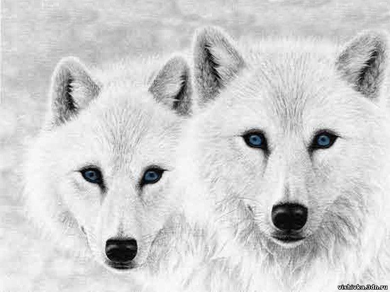 Белые волки - Волки - Схемы
